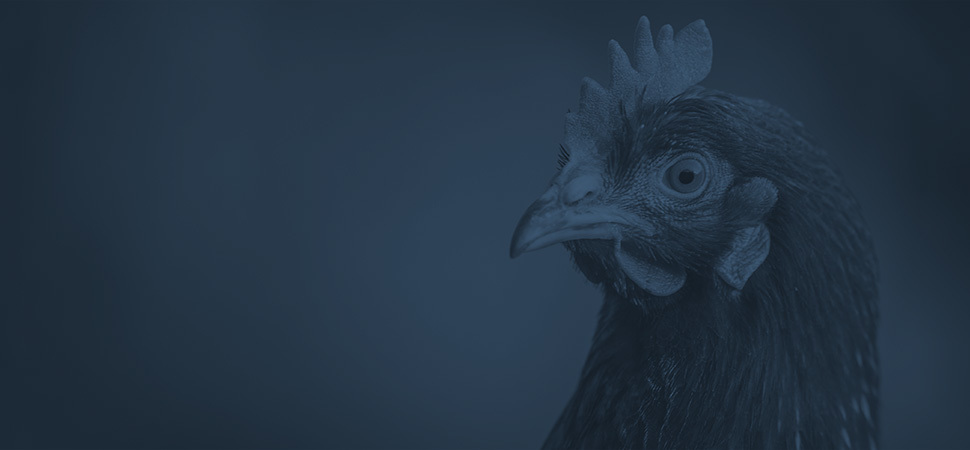 Poultry Industry Electrical Services